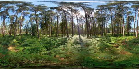 baltic forest hdri map
