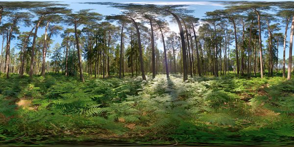 baltic forest hdri map