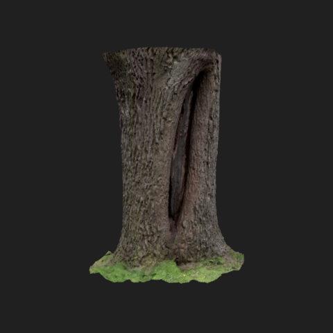 oak tree trunk scan